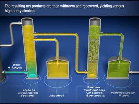 Estas bacterias convierten las emisiones de gases industriales en combustible