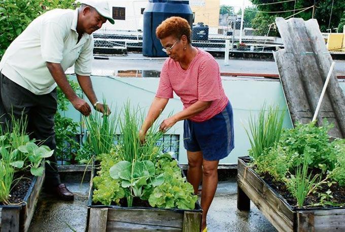 Cultivos en techos y patios de Cuba: no es moda, es necesidad