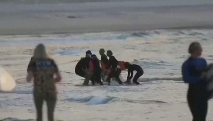 Muere surfista tras un ataque de tiburón en Australia